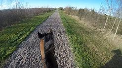 Carpet Gallop