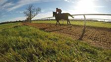Woodchip Gallop