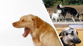 Köpekten Anlamak