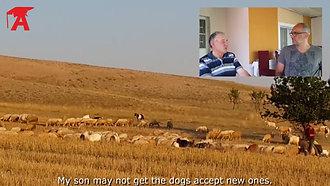 Akkuş (Akbaş) Çoban Köpeği 1 (with English subtitles)
