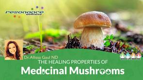 The Healing Power of Medicinal Mushrooms