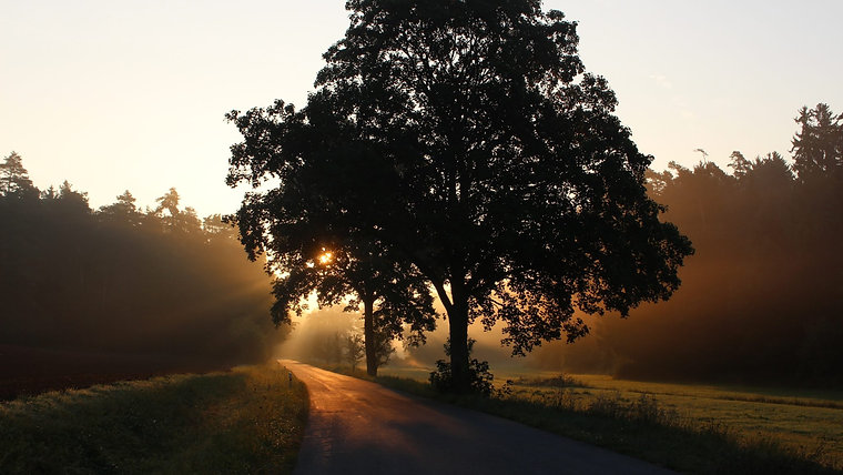 TREES of MEMORY| VIDEOTAGEBUCH