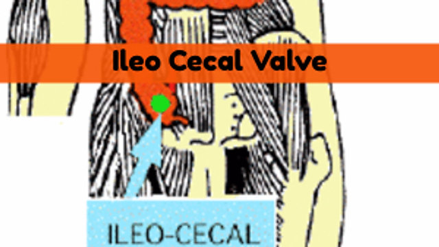 Ileo Cecal Valve