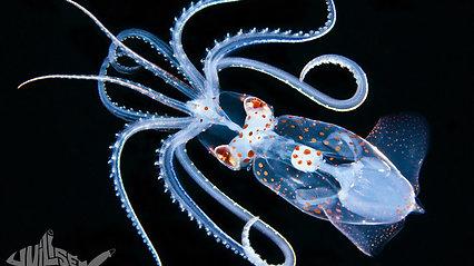 Blackwater Underwater Photography