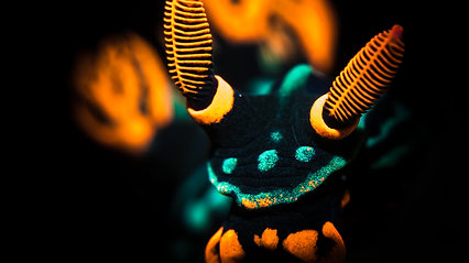 Macro Underwater Photography with Mark Hatter