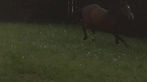 2 yr old colt by strath burn