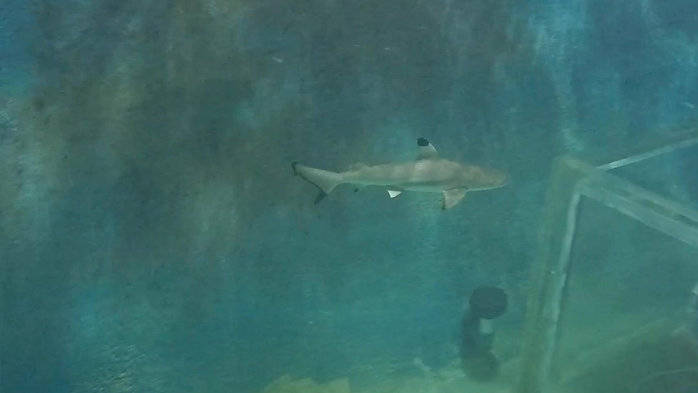East Idaho Aquarium Sharks