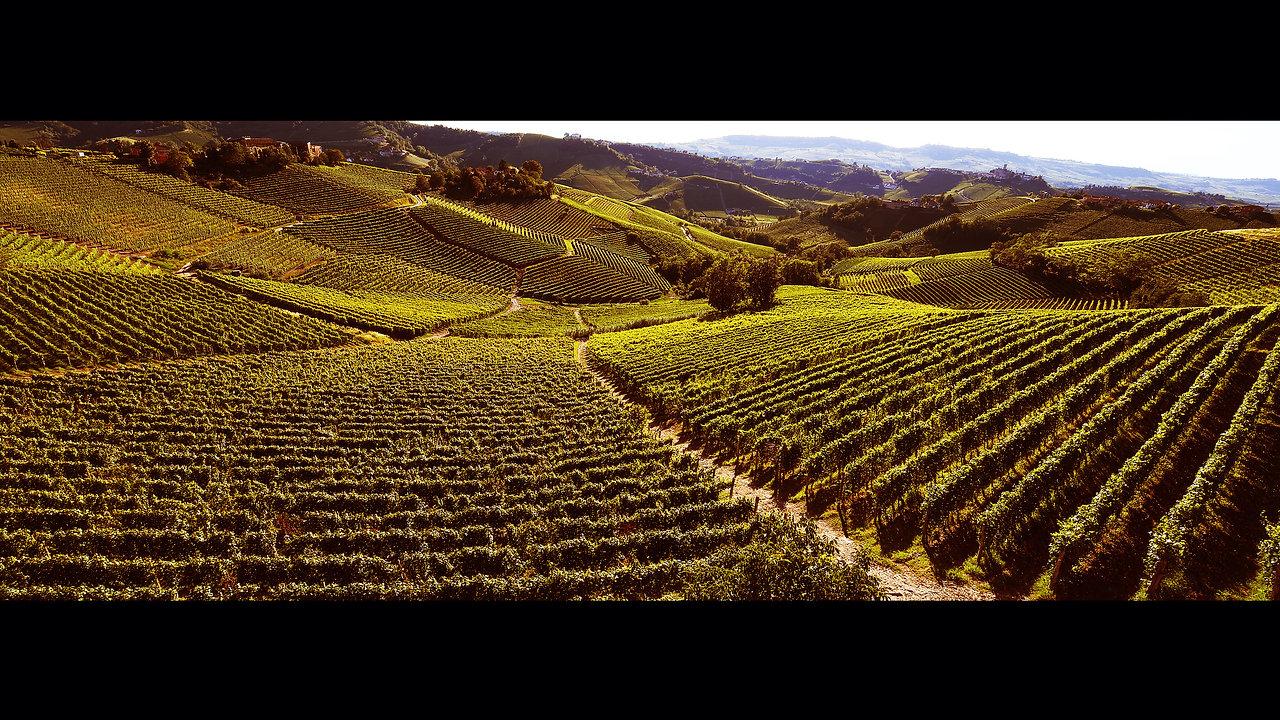 Vigneti | Vineyards