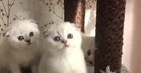 kittens2.mpg4