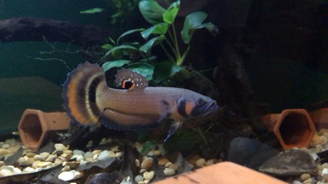 FunctionBuilt-aquatics