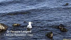 1min_seagull swimming