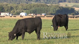 American Rancher - Thomas Angus Ranch