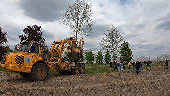 Großbaumverpflanzung