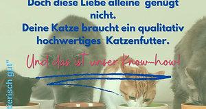 1_Katze_allgemein