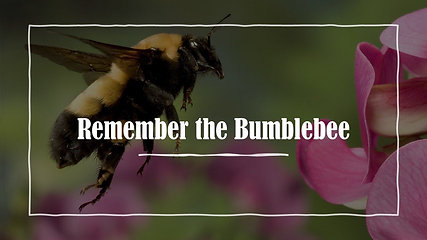 Remember the Bumblebee