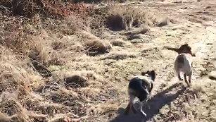 Rapport du chien