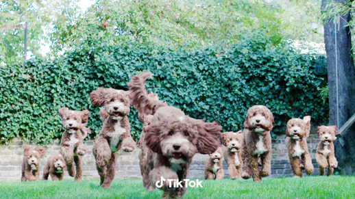 CAMPAIGN: TikTok - Mashup - Animals