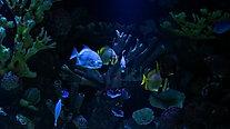 My Minute Meditation - Relaxation Aquarium