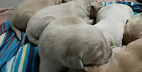 Sari, dia 9 - sonhos de cachorro