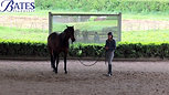 Acceptance to Stimulus with a GP Dressage Horse