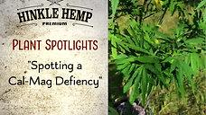 HH Plant Spotlight 'Cal-Mag Deficiency'
