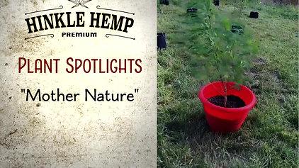 HH Plant Spotlight 'Mother Nature'...