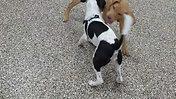 Best Friend Puppies!