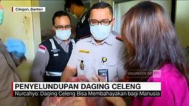 Daging Celeng Ilegal Berpotensi Ancam Kesehatan Ditahan Karantina Cilegon - YouTube