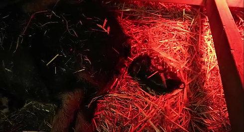 001 - Geboorte zwart beertje - 09092020