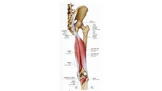④膝関節評価の基礎-スクワットの評価と展開-
