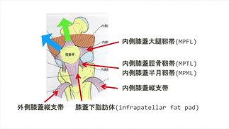 ③膝関節評価の基礎-脂肪体/靭帯