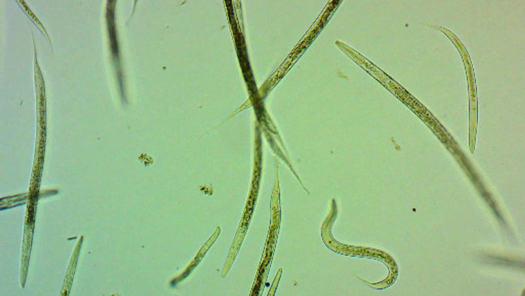 Soil Life Services Microbiology