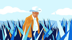 Don Julio: Agave fields