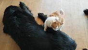 Knacki et le chat
