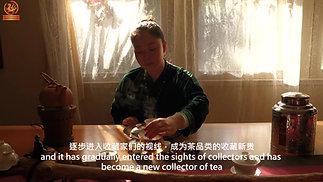 古树白茶的故事
