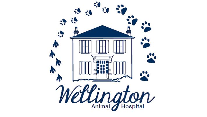 Wellington Animal Hospital Client videos
