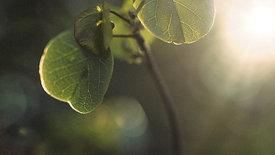 Défi vidéo n°8 - Retour a la nature