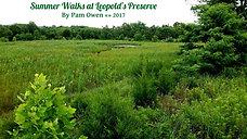 Summer Walks in Leopold's Preserve