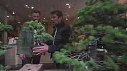 paris bonsai depuis 1987