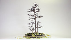 Autunm by PARIS BONSAI