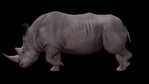 Rhino (4K)