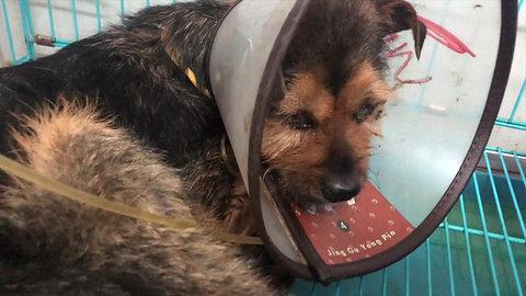 Vanderpump Dogs International Showcase