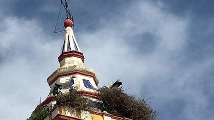 Störche auf dem Kirchturm in Castilblanco de los Arroyos.