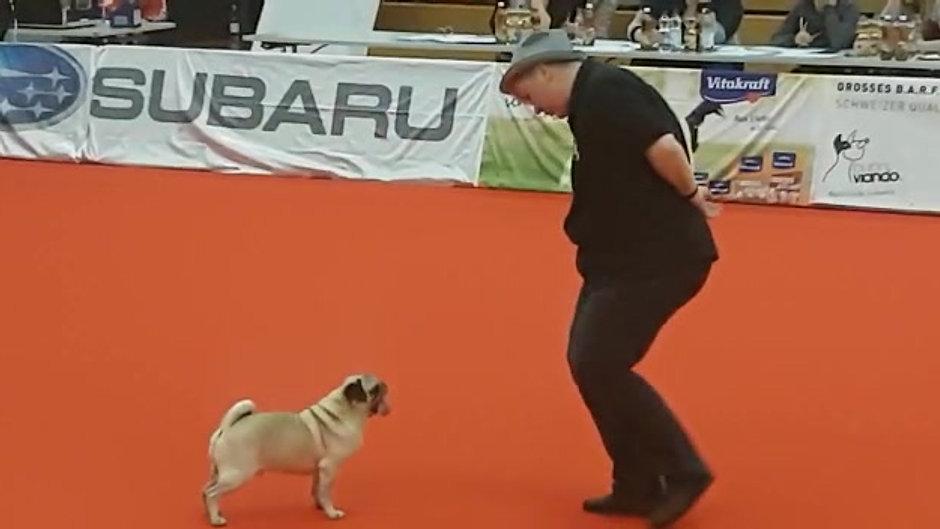 Dog Dancing  mit Mops und Ingrid van Pernis