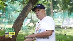 Simpleng Ranging Advice sa Sabong Simple Lang February 15, 2020