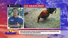 Paggamit ng Methyltestosterone sa Sabong with LDI Headlines January 17, 2021