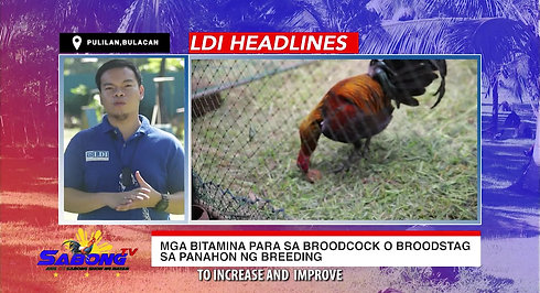 Paggamit ng Methyltestosterone sa Sabong with LDI Headlines January 17, 2021