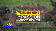 Antibiotics for Sabong with Thunderbird November 29, 2020
