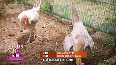 Breeding with Old Broodcock sa LDI Headlines August 1, 2021