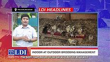 Sabong Brooding sa Indoor o Outdoor with LDI Headlines October 24, 2020